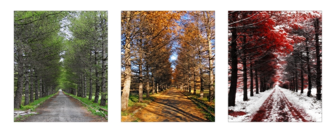three_seasons_forest